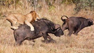 Wildlife Animals of Africa Live stream Full HD