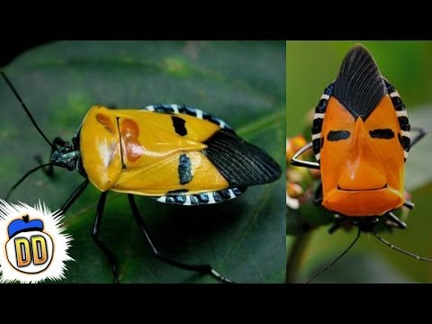 15 Weirdest Insects on Earth
