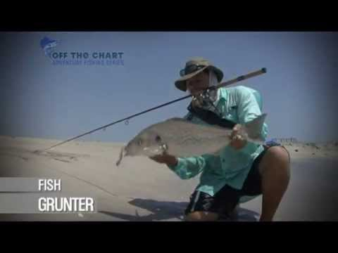 how to catch bait fish from shore