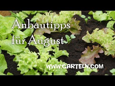 Anbautipps für den August