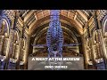 A Night at the Natural History Museum - Dino Snores for Grown Ups | One Hungry Asian