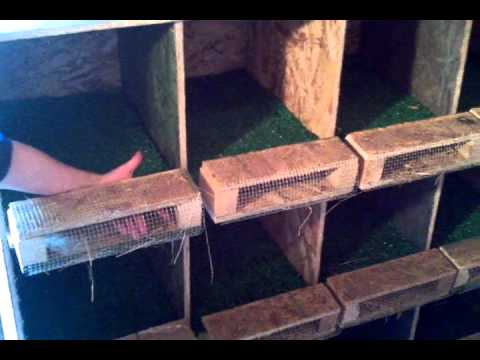 Roll Out Nest Boxes For Egg Eaters Amp Cleaner Eggs Youtube