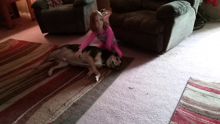 Big Dog Gets a Belly Massage from a Tiny Girl