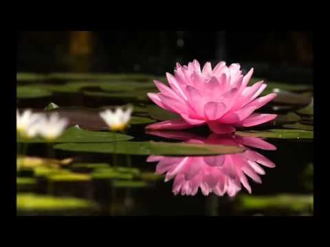 6. Prostrazione - Tara Meditazione