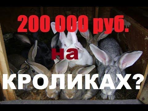 Поднять 200000 рублей на кроликах?!