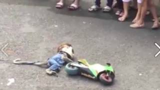 Monkey ride Racing motorcycle accident - monkey rides motorcycle - in public - funny