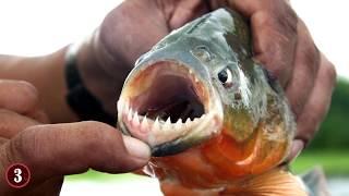 Deadliest Animals Of The Amazon