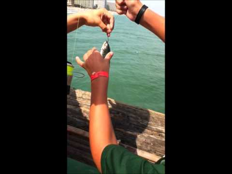 Shark Fishing on Apache Pier, Myrtle Beach, SC