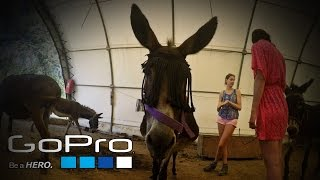 "GoPro ""Life At The Donkey Rescue"""