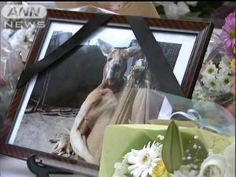 先月死んだカンガルー「ハッチ」にファンが別れ(09/12/13)