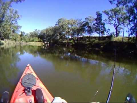 Kayak Fishing for Murray Cod