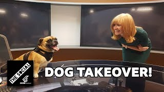 Bring Your Dog To Work Day | Dog Tour Guide