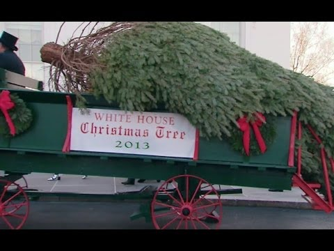 The First Lady Receives the 2013 White House Christmas Tree