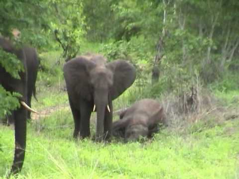 Africa-elephants and giraffes