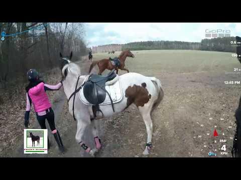 CWAŁ WYPADEK W TERENIE!!!   ACCIDENT ON A HORSE   Gopro
