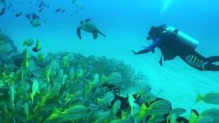 ProShotCase Filming Underwater with my iPhone