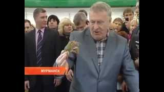 Жириновский в Мурманске в магазине отжигает  Новости 2015