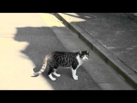 Alley Cat - 野良猫