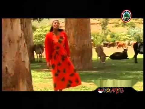 Oromo Music - Hawwi Tezera - Walee yaa walee