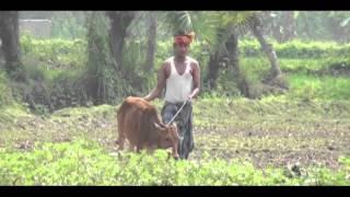bangla new  Song 2016 Full HD  Muchi Azad 24 tv