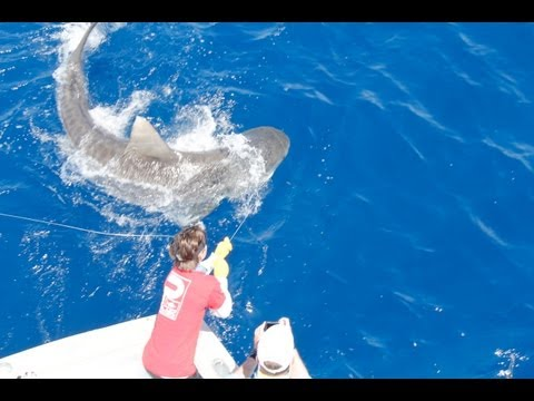 Islamorada Shark Fishing