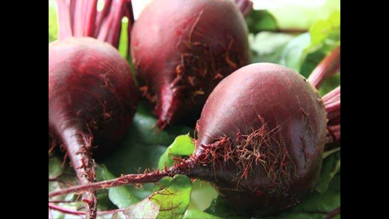 Агротехника выращивания свёклы. Посадка свёклы семенами 81