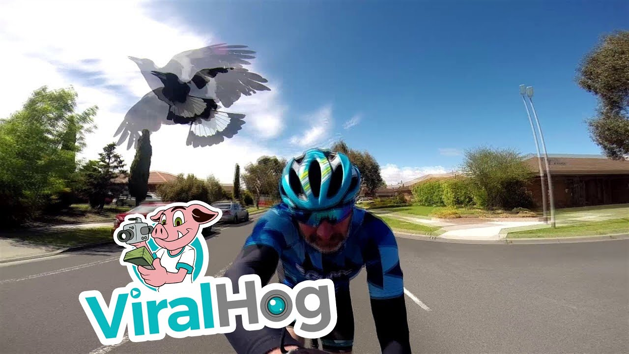And Thats Why You Need A Helmet When Bird Watching