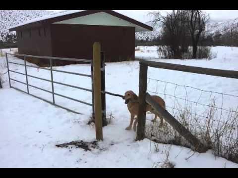 Le chien qui ne veut pas lâcher son bâton