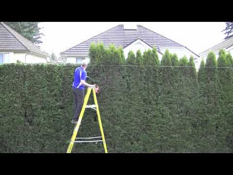 trimming cedar hedge,time lapse