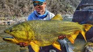 CRISTIAN VANEGAS Wild Golden Dorado Fishing in Bolivia 2016.