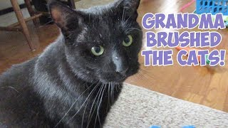 Boo Year 2 # 181 - Grandma Brushed The Cats, American Picker's Nashville Store, The Parthenon