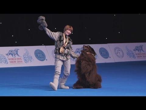 Репортаж о выставке World Dog Show 2016 в Москве