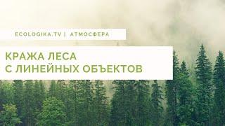 Кража леса с линейных объектов.