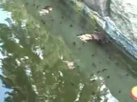 Swimming And Tadpoles In Kentucky Youtube