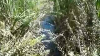 Vídeo 22 de Ziza Fernandes