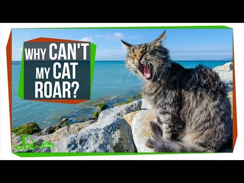 Why Can't My Cat Roar?