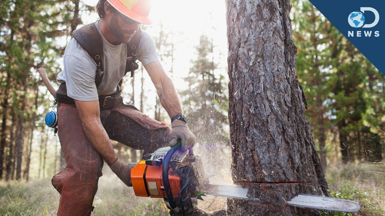 the need for people to stop cutting trees in order to conserve forests Forest conservation in the united states when people started to realize that the resources were not boreal forests are made up of evergreen trees.