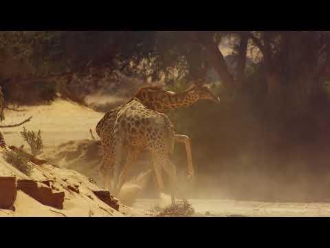 【地球:奇蹟的一天】幕後花絮:長頸鹿釘孤枝篇