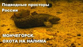 Подводная охота на налима