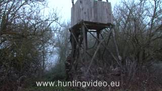Wild Boar Hunting In Hungary 1 (HD)