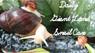 Daily Snail Care