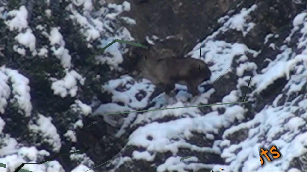 Ibex Hunting in Tajikistan of Markhor Ibex Hunts by