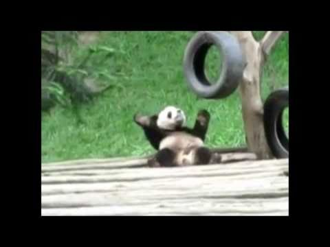 Cute Animals Dancing to Papa Americano