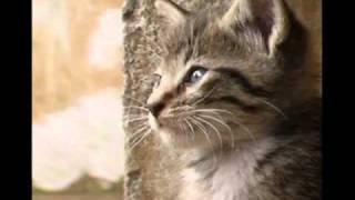 Watch Cristian Castro Necesitas Amor video