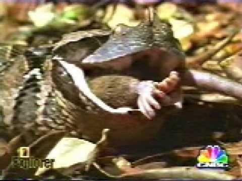 snake compilation 1 Video