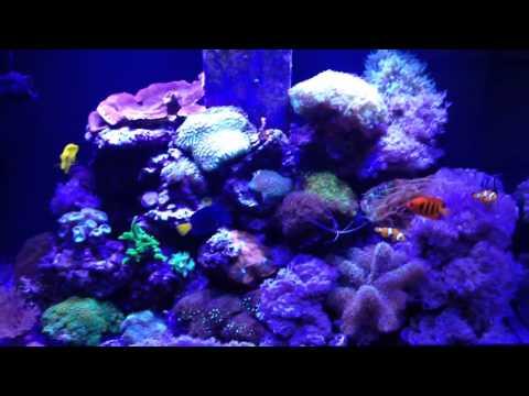 Aqua reef 300 marine tank setup update