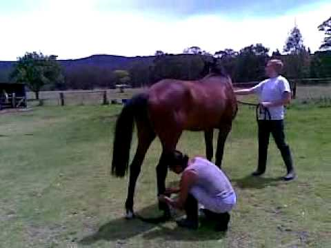 Horse Mating video