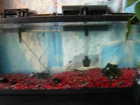 Hydroponics, Aquarium, And Indoor Garden 1