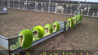 الشعير المستنبت صناعة الربيعي 03 12