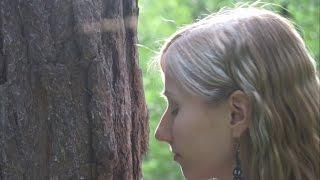 Mensch und Baum - Das Geheimnis der Waldbäume (Clemens G. Arvay)
